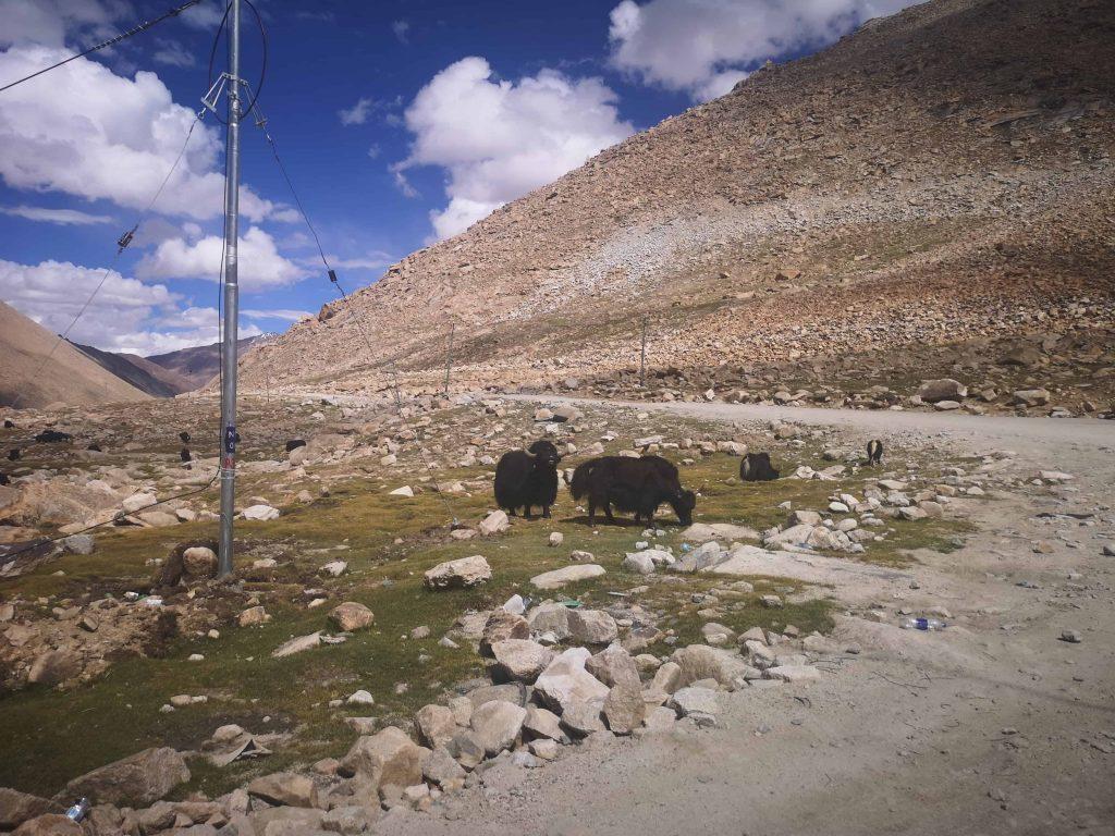 【印度自助】班公錯的各種色彩+野生動物探索之旅